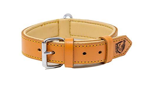 Riparo Echtes Leder Verstellbares K-9 Hundehalsband mit Zusätzlicher Verstärkung (XL: 4,5CM Breit für...