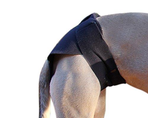 HEALERS heilpraktikern Hund Angst Therapeutische Multi Verwendung Wrap