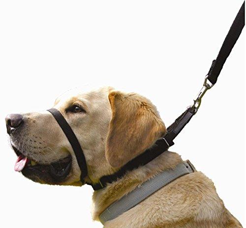 Canny Collar Halsband für Hunde, einfache und effektive Hilfe beim Hundetraining und verhindert das...