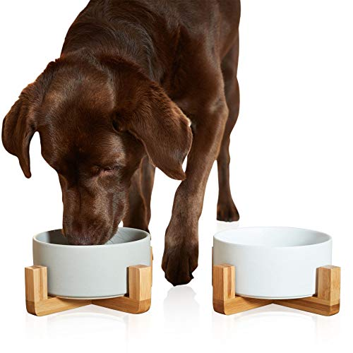 PiuPet® 2 x Napf für Katzen und Hunde - je 850 ml - Futternapf Katze - Futternapf Hund - Hundenapf...