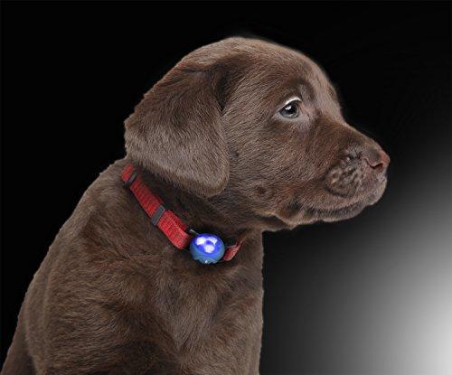 LED Silikon Leuchtanhänger inkl. Batterie Leuchthalsband für Hund Haustier Katze UVM. Led Hundehalsband...