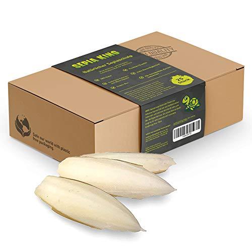 Sepia-King®Sepiaschalen – ECO Box 25 Stück | Natürliche Kalzium und Mineralstoff-Quelle | Sepia...
