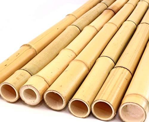 1x Bambusrohr gelb, Moso Bambus Gebleicht mit Durch. 2,8-3,5cm, Länge 200cm - Kletter Hilfe für Garten...
