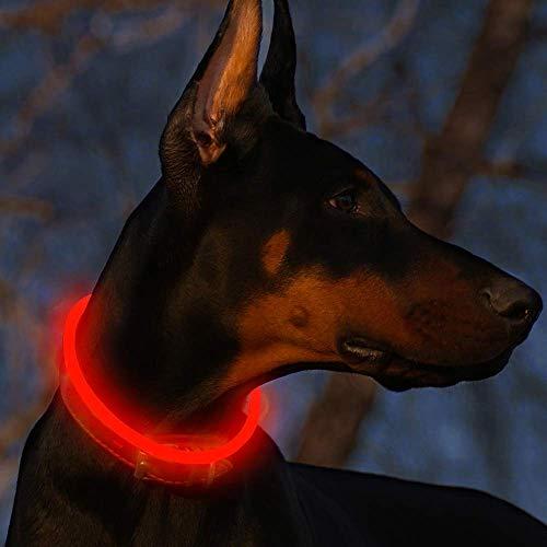 Fttouuy LED Leuchthalsband Hunde Halsband USB wiederaufladbar - Längenverstellbarer Haustier Sicherheit...