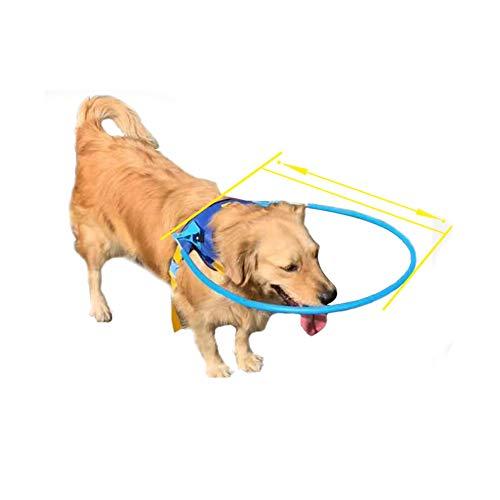 N\A Pet Safe Halo Geschirr für blinde Hunde, Kunststoff, Schutzweste-Ring für Hunde mit kranken Augen,...