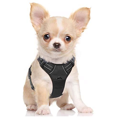 rabbitgoo No-Pull Hundegeschirr für kleine Hunde Welpengeschirr Einstellbar Weich Geschirr Sicher...
