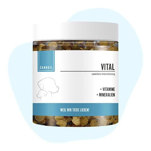 Canobel VITAL Vitamin B Komplex für Hunde & Katzen I B1, B2, B3, B5, B6, B9, B12, K3, D3, Calcium,...