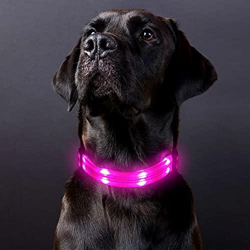PZRLit LED Leuchthalsband Hund USB Aufladbar Einstellbare Länge Wasserdicht Hundehalsband Nylon...