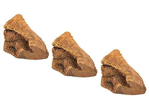 Wildfang® Kauwurzel aus der Baumheide für Hunde, Zahnpflege & Kaumuskel Training, Natürliches...
