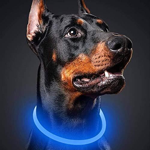 LED Leuchthalsband für Hunde | USB Aufladbar | LED Hundehalsband | MEGA HELLE | Leuchtend...