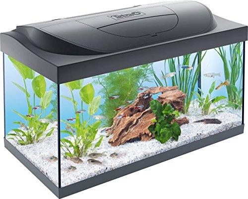 Tetra Regular Starter Line Aquarium-Komplettset mit LED-Beleuchtung stabiles 54 Liter Einsteigerbecken...
