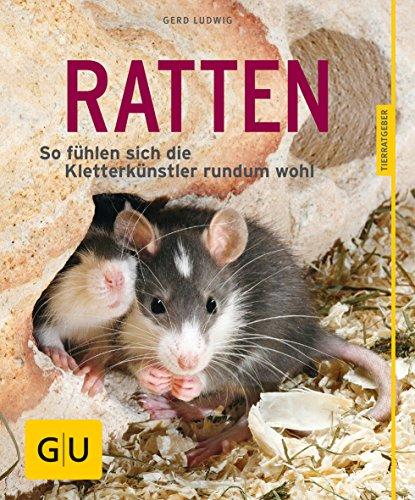 Ratten als Heimtiere, glücklich & gesund gelb 12 x 3,5 cm: So fühlen sich die Kletterkünstler rundum...