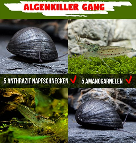 Algenkiller Gang - die unschlagbaren Algenfresser im Aquarium - 5 x Neritina pulligera & 5 x Caridina...