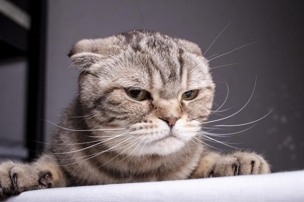 Aggressive Katzen beruhigen