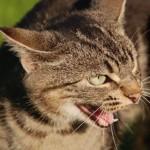 Wie lässt sich eine Aggressive Katze beruhigen
