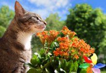 Giftig für Katzen