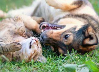Katze an Hund gewöhnen