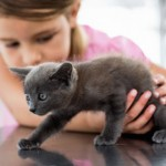 Katzen und Kinder