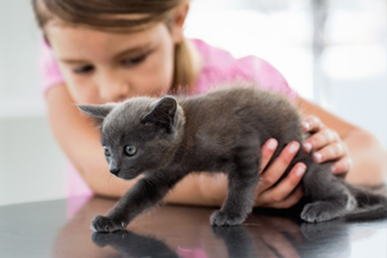 katzen und kinder tipps f r familien tierischehelden. Black Bedroom Furniture Sets. Home Design Ideas