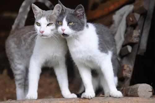 Katze und Kater schmusen