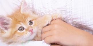 Katze auf dem Arm