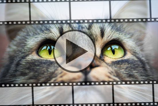 Lustige Katzen Videos Archive Tiermagazin Tierischehelden