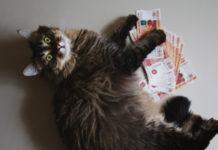 Kosten für die Katze