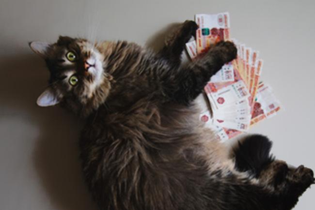 was kostet eine katze im monat tierischehelden de. Black Bedroom Furniture Sets. Home Design Ideas