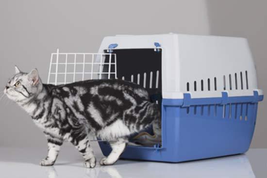 Katze aus dem Tierheim