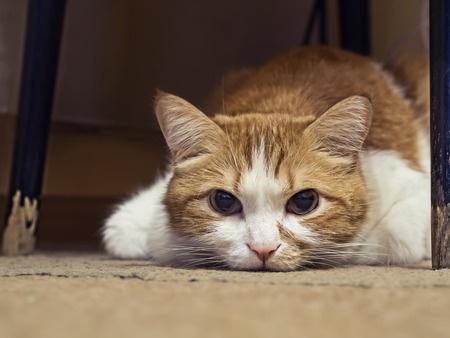 Katze liegt frisst nicht