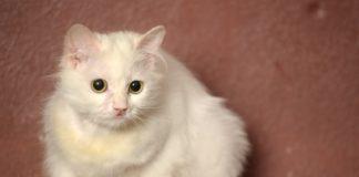 Katze ohne Orientierung