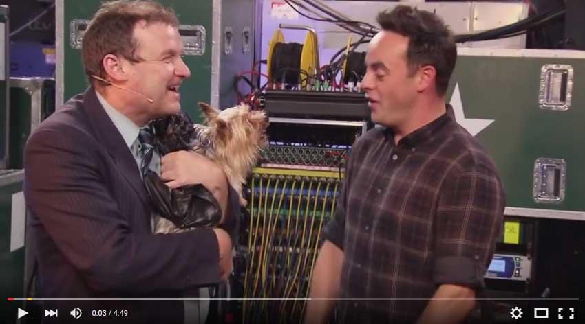 Lustiges Video über Hunde