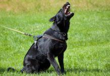 Hund bellt auf Kommando