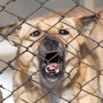 Warum ist mein Hund aggressiv gegen andere Hunde