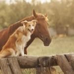 Freundschaft zwischen Hund und Pferd