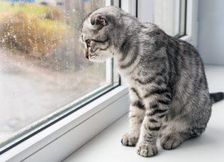 Eine Katze alleine am Fenster der Wohnung