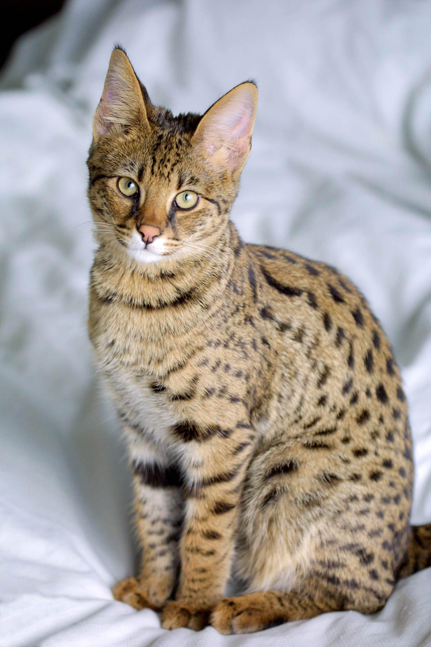 Savannah Katzen - Jason Douglas gemeinfrei via wikimedia