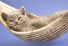 Matze schläft in Hängematte