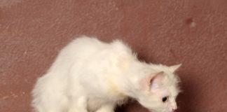 Brechen Würgen Katze