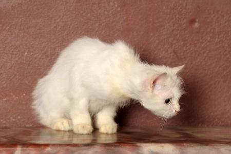 meine katze erbricht schaum tiermagazin tierischehelden