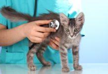 Katze beim Arzt