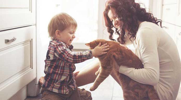 Katze beißt Kind