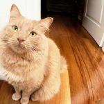 Meine Katze uriniert überall hin, was kann ich tun?
