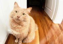 Katze uriniert überall hin