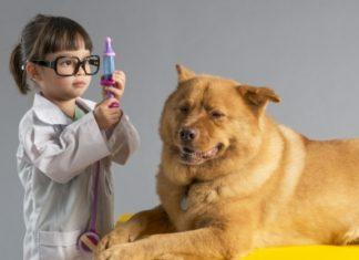 Hund entwurmen
