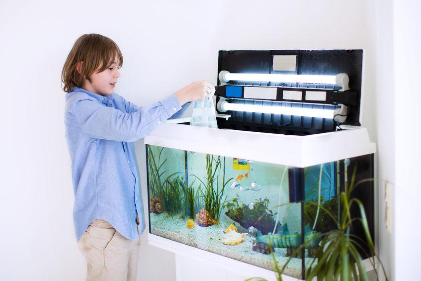 Aquarium Außenfilter reinigen