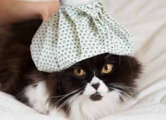 Kranke Katzen schnupfen