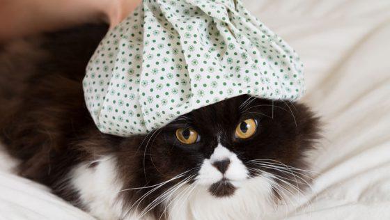 Katzenschnupfen: Symptome und Folgen