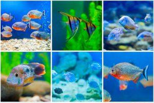 Aquaristik & Aquarium Zubehör
