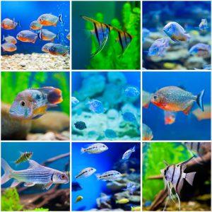 Aquaristik & Aquarium